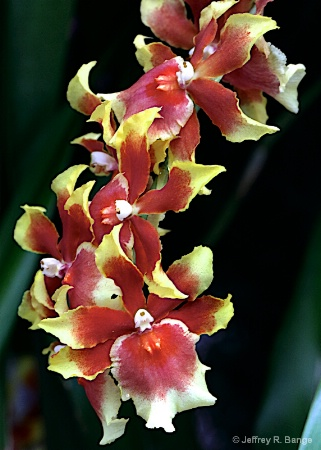 Orchid #20