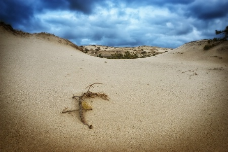 Stormy Sky Over Provincetown Dunes