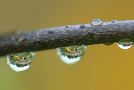 Gardens In Drops