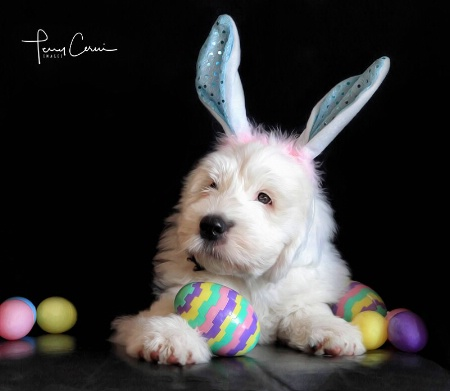 The Easter Puppy