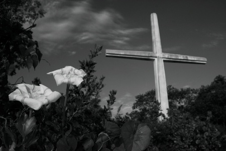Lilies by the Cross
