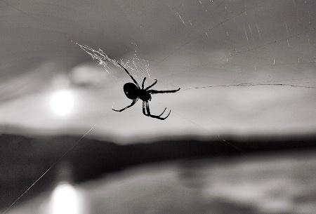 Spider at Sunset