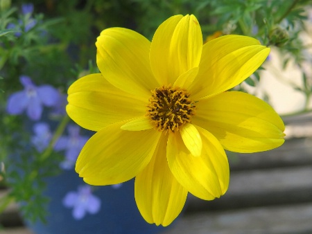 Standout Yellow