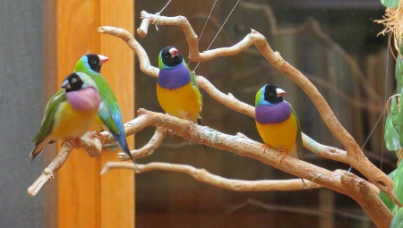 Finch Grouping