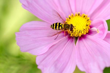 Last of the Summer Nectar