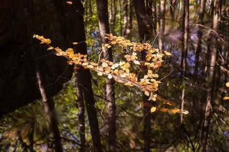 Leaf Raft