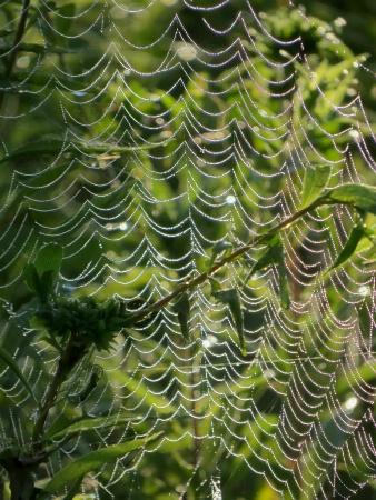 Web Patterns