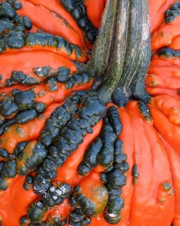 Pimply Pumpkin Closeup