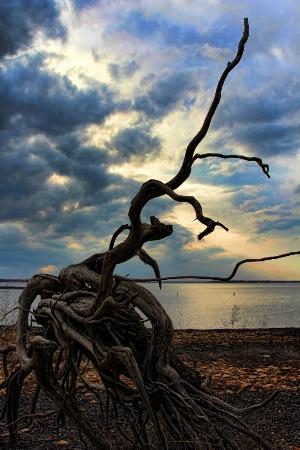 Mother Nature's Sculpture