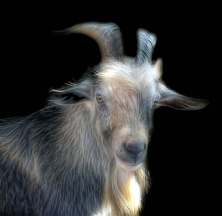 A Handsome Old Goat