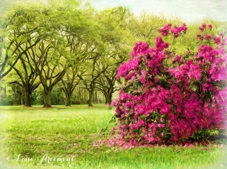 Azaleas Are Blooming