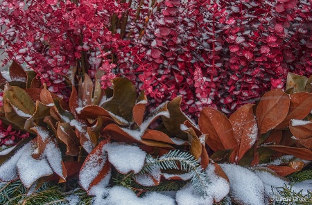Winter Colours under a Dusting of Snow