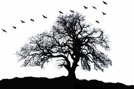 Oak Tree Silhouette With Birds