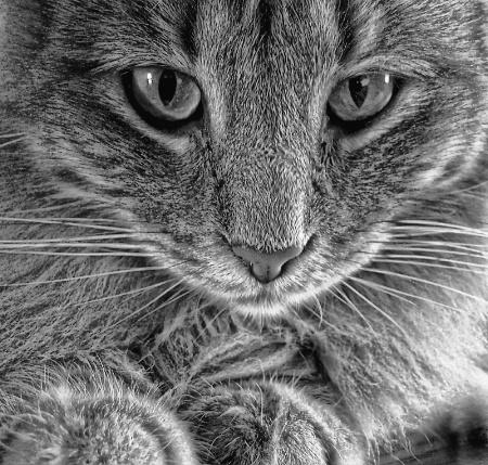 Leggo My Kitty Toy!