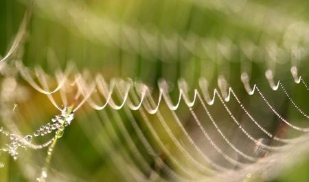 Spiderweb Bones