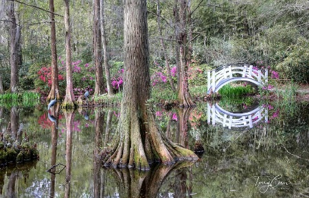 Springtime in the Swamps