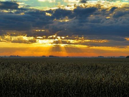 Rays Over Cornfield