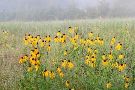 Foggy Prairie Morning