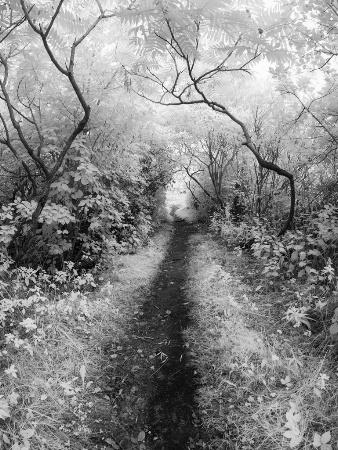 Island Pathway