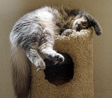 Precarious Position