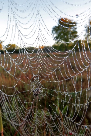 Web On A Prairie Morning