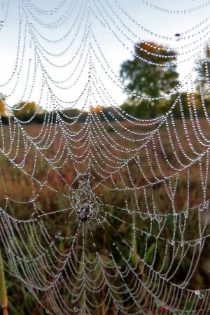 Web On A Prairie Morning