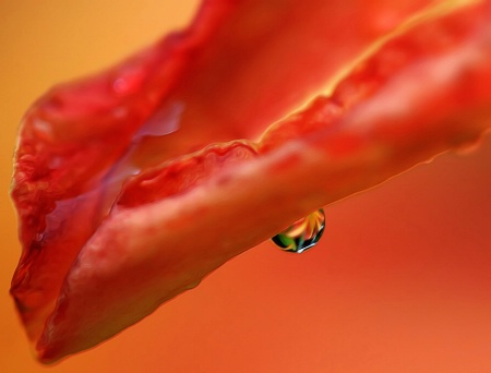 Flower In A Raindrop