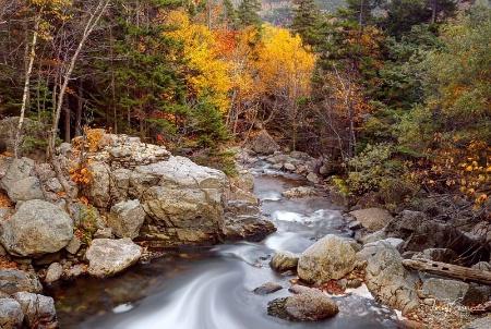 New Hampshire Woods
