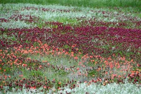 Eufaula Damsite In Spring Color