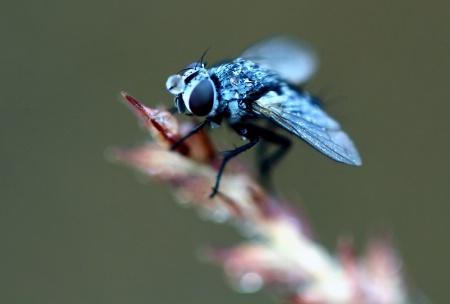 Dewy Fly