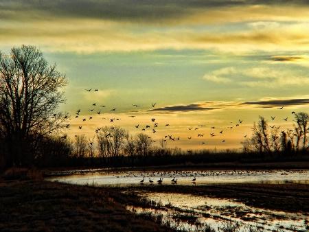 Sunrise At Sequoyah NWR