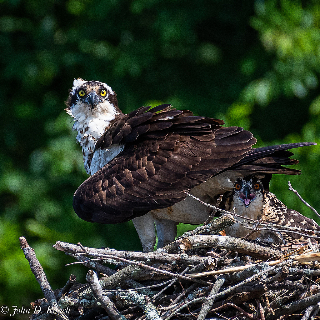 Momma and Fledgling