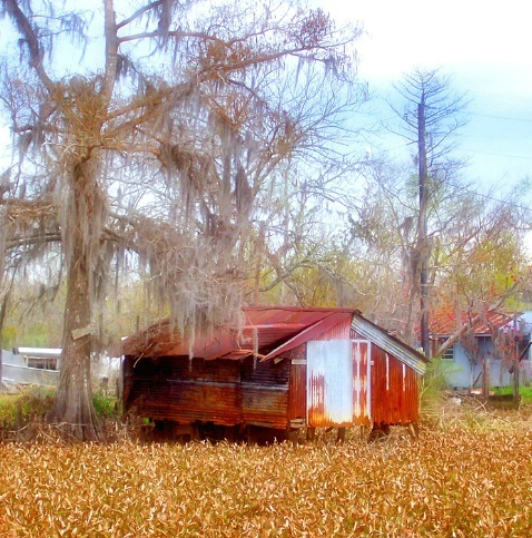 Swamp House 1