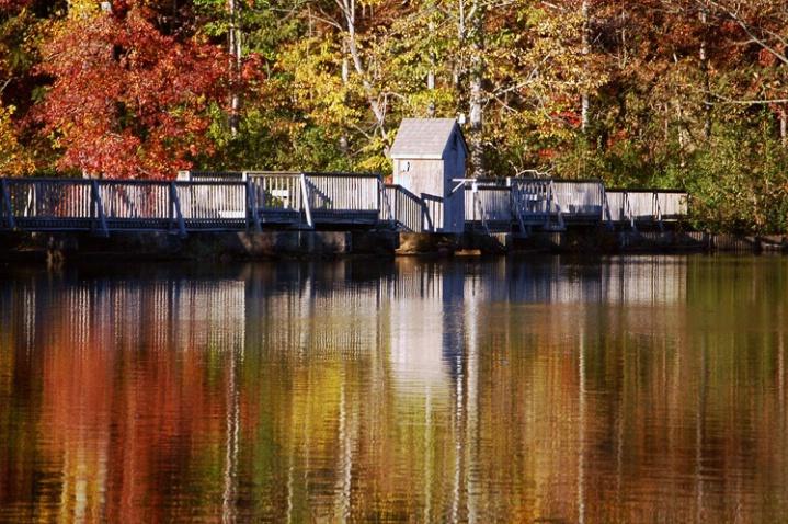 Fall Bridge Landscape