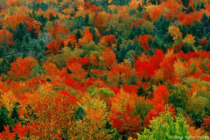Autumn Trees in Vermont
