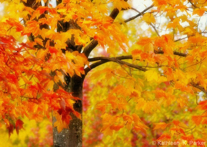 Windy Autumn Leaves