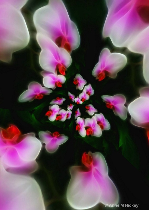 Orchid Explosion