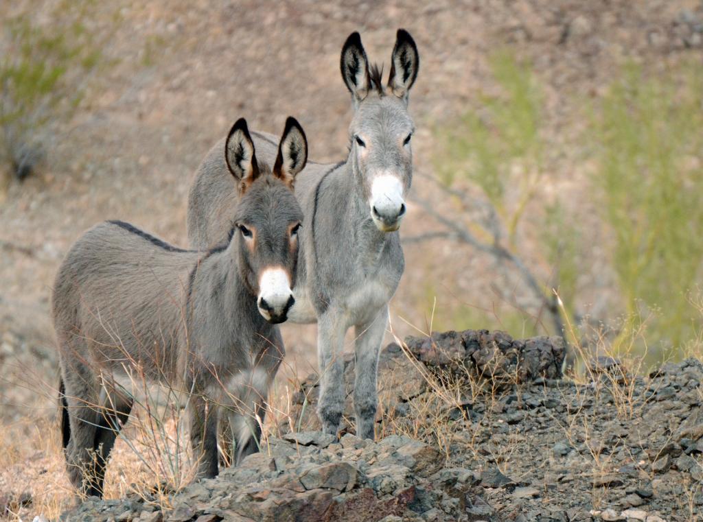 Desert Observers