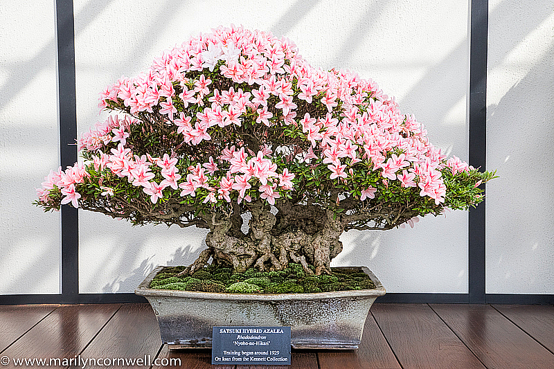 A Garden in Flower