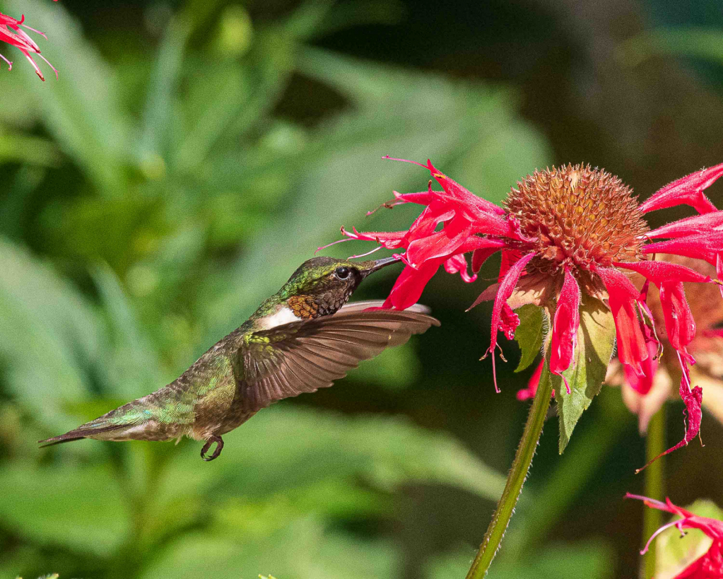 Hungry Hungry Hummer