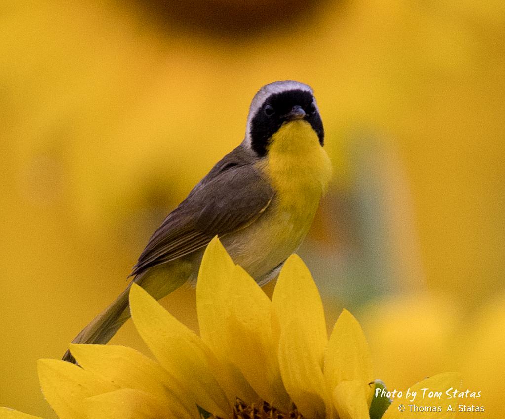 SunflowersJuly20196of10