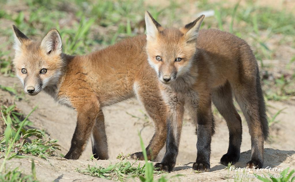 FoxKits2of5