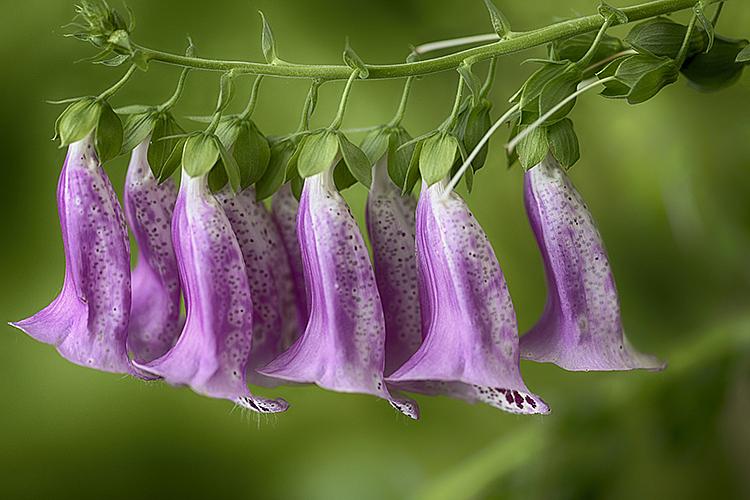 Flower 19-6879