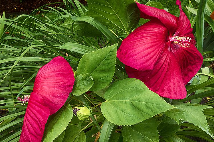 Flower 19-8539