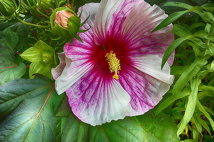 Flower 19-8544