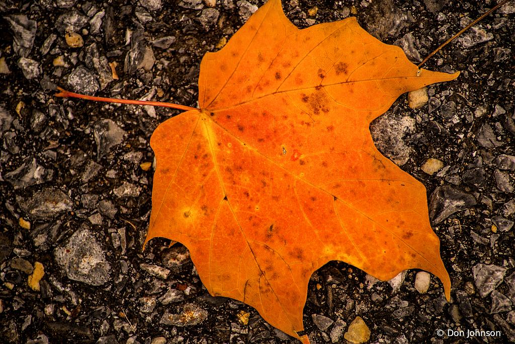 Fallen Leaf 10-29-19 099