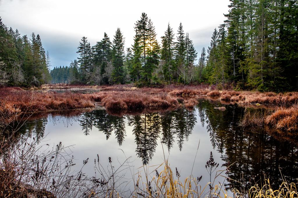 Dewatto Pond