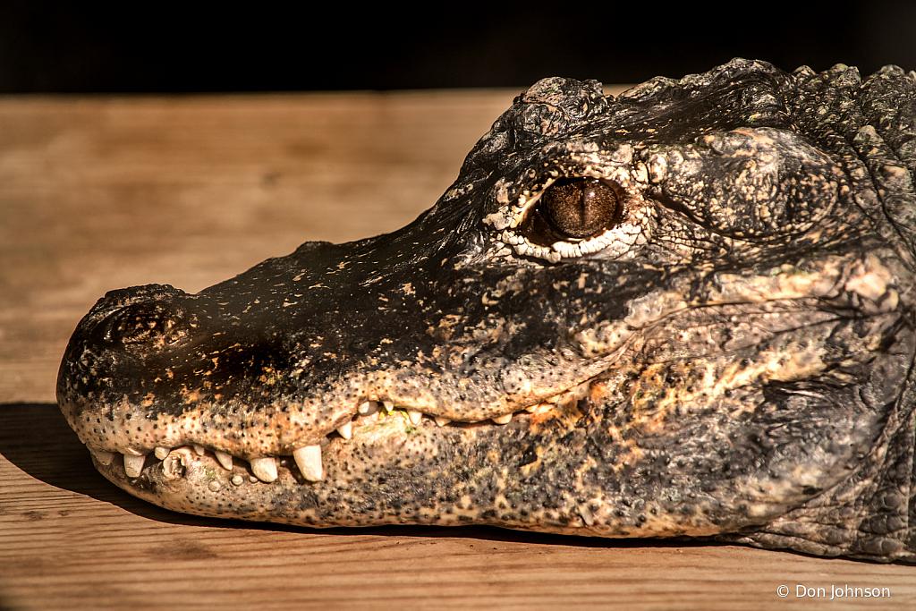 Gator 8-25-19 173