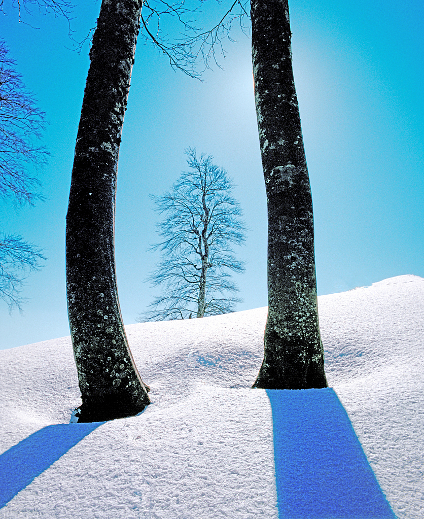 A winter picture in blue and white.