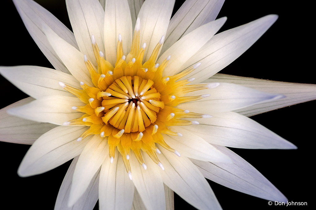 Water Lily Macro 9-11-19 186